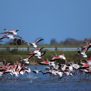 fenicotteri-parco-del-delta