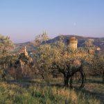 Brisighella ed i suoi ulivi