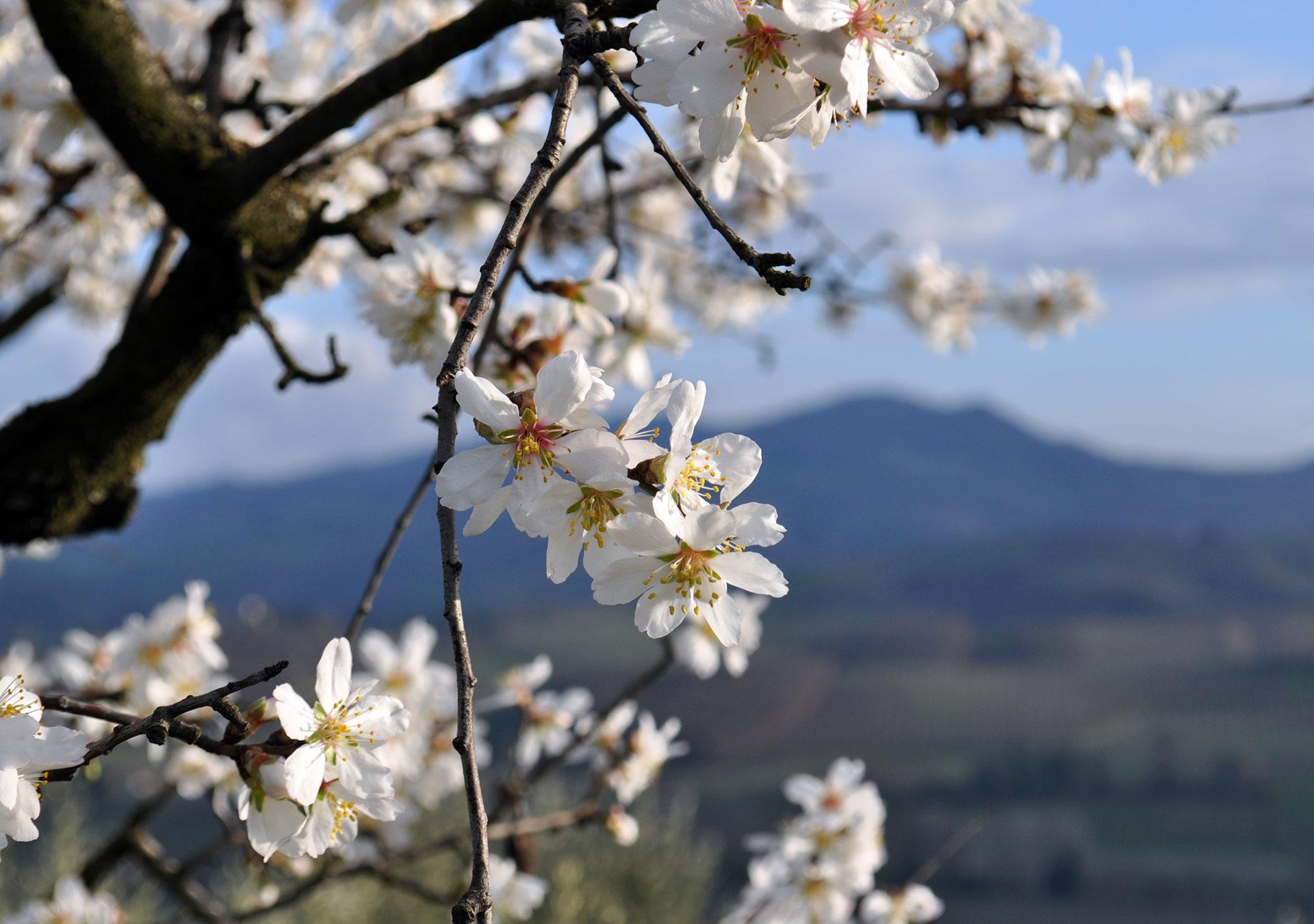 Primavera-Colline-Romagna