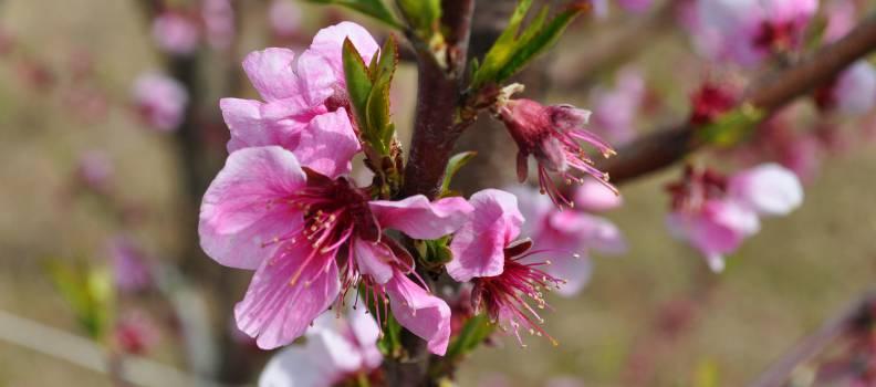 1° Maggio, un lungo weekend tra delizie e primizie di Primavera